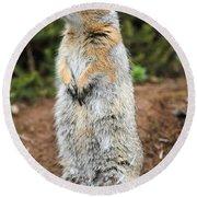 Arctic Ground Squirrel Round Beach Towel