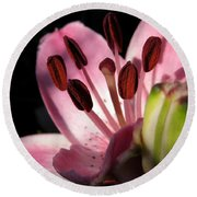 Asiatic Lily Named Vermeer Round Beach Towel