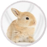 Baby Lop Rabbit Round Beach Towel