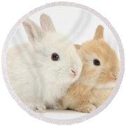 Baby Lop Rabbits Round Beach Towel