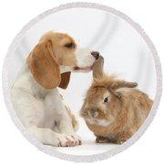 Beagle Pup And Rabbit Round Beach Towel