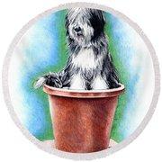 Beardie In A Pot Round Beach Towel