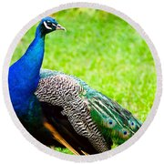 Beautiful And Pride Peacock On A Lawn Round Beach Towel