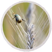 Beetle On The Wheat Round Beach Towel