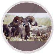 Bighorn Sheep Round Beach Towel