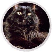 Black Persian Cat Round Beach Towel