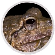 Bobs Robber Frog Round Beach Towel