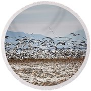 Bombay Beach Birds Round Beach Towel