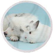 Border Collie Pup Sleeping With Rabbit Round Beach Towel