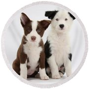 Border Collie Puppies Round Beach Towel