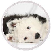 Border Collie Puppy Round Beach Towel