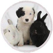 Border Collie Pups With Black Rabbit Round Beach Towel