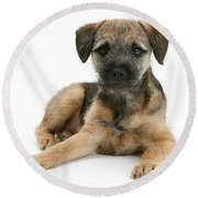 Border Terrier Puppy Round Beach Towel