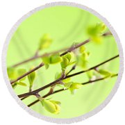 Branches With Green Spring Leaves Round Beach Towel by Elena Elisseeva