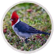 Brazillian Red-capped Cardinal Round Beach Towel