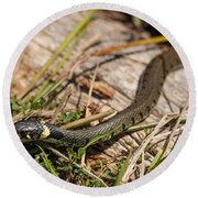 British Grass Snake Round Beach Towel
