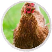 Brown Hen On A Lawn Round Beach Towel