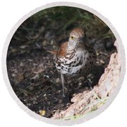 Brown Thrasher Round Beach Towel