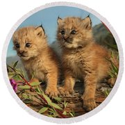 Canadian Lynx Kittens, Alaska Round Beach Towel