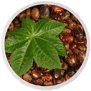 Castor Bean Leaf And Seeds Round Beach Towel