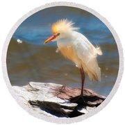 Cattle Egret In Breeding Plumage Round Beach Towel