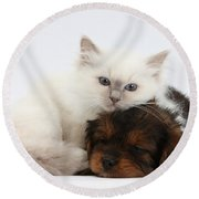 Cavapoo Pup And Blue-point Kitten Round Beach Towel