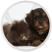 Cavapoo Pup And Shaggy Guinea Pig Round Beach Towel