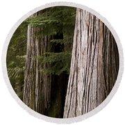 Cedar Trees, Whistler, British Columbia Round Beach Towel