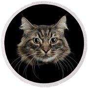 Close Up Of Cats Face Round Beach Towel