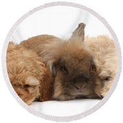 Cockerpoo Puppies And Rabbit Round Beach Towel