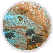 Collare Butterflyfish Round Beach Towel