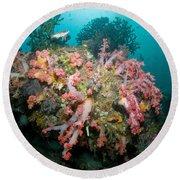 Colorful Reef Scene, Komodo, Indonesia Round Beach Towel