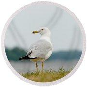 Common Gull Round Beach Towel