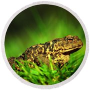 Common Toad Round Beach Towel