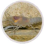 Crayfish Round Beach Towel
