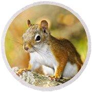 Cute Red Squirrel Closeup Round Beach Towel