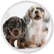 Dachshund Puppies Round Beach Towel
