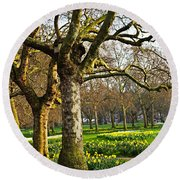 Daffodils In St. James's Park Round Beach Towel by Elena Elisseeva