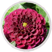 Dahlia Named Pride Of Place Round Beach Towel