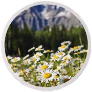 Daisies At Mount Robson Provincial Park Round Beach Towel