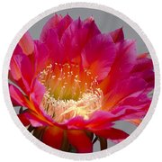 Deep Pink Cactus Flower Round Beach Towel