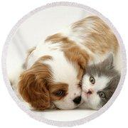 Dog And Cat Round Beach Towel by Jane Burton