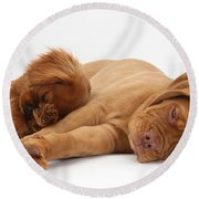 Dogue De Bordeaux And Cavalier King Round Beach Towel
