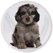 Doxie-doodle Puppy Round Beach Towel