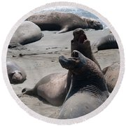 Elephant Seal Colony On Big Sur  Round Beach Towel