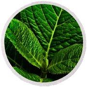 Emerging Hydrangea Leaf Round Beach Towel