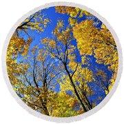 Fall Maple Trees Round Beach Towel