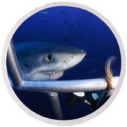 Female Great White Shark, Guadalupe Round Beach Towel