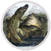 Florida Alligators Round Beach Towel