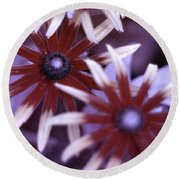 Flower Rudbeckia Fulgida In Uv Light Round Beach Towel by Ted Kinsman